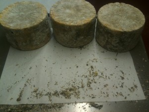 Errington cheese